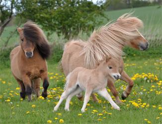 stor heste bamse