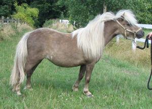 Little blue poney - 3 part 2
